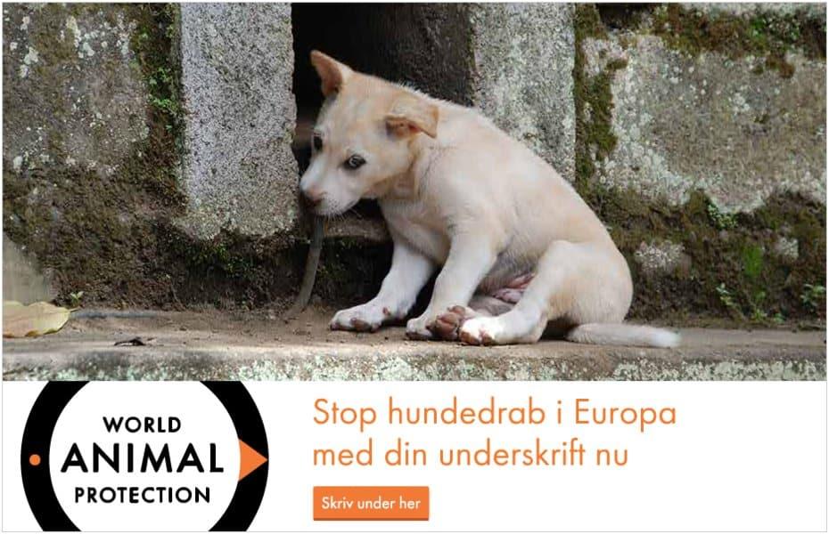 stop hundedrab