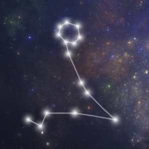 Hvornår er Fisken født - fisk stjernetegn